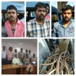 """""""56 deer horns and one passenger Auto seized,Trio arrested in Bengaluru""""."""