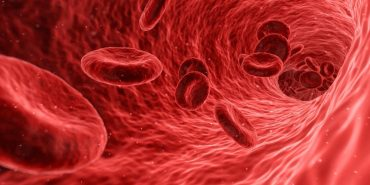 New approach to speed up red blood cells generation in the lab