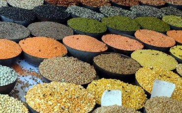 Procurement operations of Pulses and Oilseeds directly from Farmers at MSP