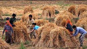 Wheat harvesting across the country continues briskly amidst the lockdown