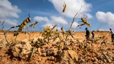 Continuous action is being taken to control locust swarms – Control operations undertaken in 2,83,929 hectares area in Rajasthan, Madhya Pradesh, Punjab, Gujarat, Uttar Pradesh, Maharashtra, Chhattisgarh, Haryana and Bihar from 11th April 2020 till 9th July 2020