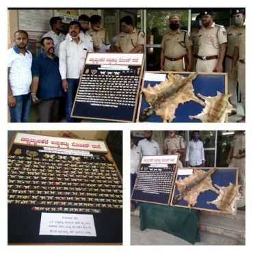 Major Wildlife Haul unearthed by CK Achukkattu police, arrested four Poachers,400 leopard and 6 tiger nails seized in Bengaluru: