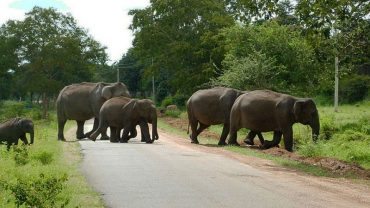 Govt. approves advisory for management of Human-Wildlife Conflict across the country