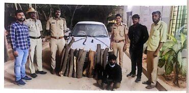 Sandalwood Smuggler Held In Bengaluru, Logs Worth Rs 3.4 Lakh Seized