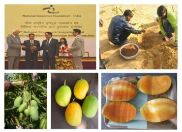 Kota farmer develops mango variety that bears fruits round the year