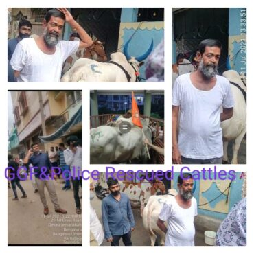 Ahead of Bakrid Gou Gyan foundation activists rescued six cattle in Bengaluru