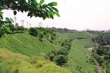 Coal Project enhances Green Cover under Mission Mode